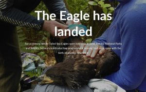 A White Tailed Sea Eagle bearing an egg for hatching