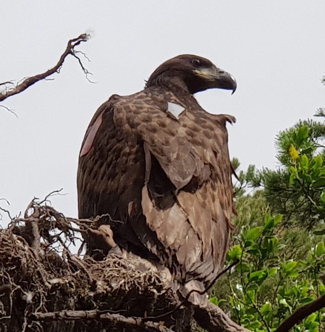 Eagle after flight